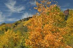 Aspen Peaking Photo stock