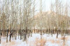 Aspen Population de Colorado fotografía de archivo libre de regalías