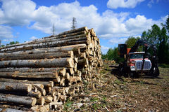 Aspen (Populus tremuloides) and Log Loader on Summer Landing Royalty Free Stock Photo
