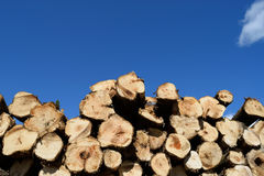 Aspen (Populus Tremuloides) Pulp Pile Royalty Free Stock Photo