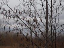 Aspen in primavera Fotografia Stock Libera da Diritti