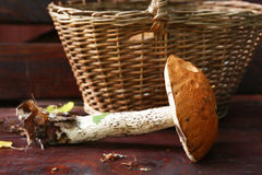 Aspen red cap mushroom beside the wicker basket Royalty Free Stock Photography