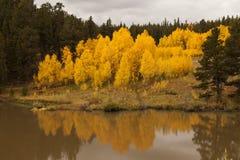 Aspen Reflection Stock Photography
