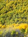 Aspen Ridge Stockfoto