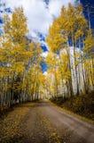 Aspen Road Stock Photos