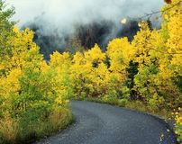 Aspen Road. An asphalt road through an aspen forest in the fall stock image