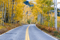 Aspen Road in autumn color Royalty Free Stock Image