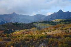 Aspen in san juan Stock Images