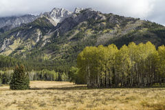 Aspen Stand and Mount Ishbel Stock Photography