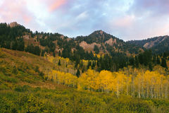 Aspen, Sunset and Mountain, Neff's Canyon, Utah Royalty Free Stock Photography