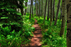 Aspen Trail Stock Photography