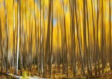 Aspen Tree Abstract Motion Blur jaune Images libres de droits