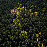 Aspen Tree Aerial Image stock