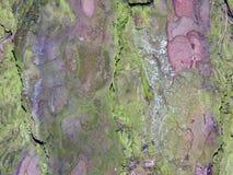 Aspen tree bark Stock Photography