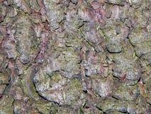 Aspen tree bark Stock Images