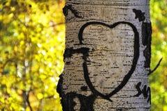 Aspen Tree Heart Royalty Free Stock Photo