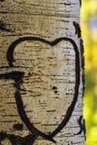 Aspen Tree Heart Stock Photos