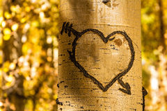 Aspen Tree Hearts Royalty Free Stock Photos