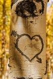 Aspen Tree Hearts Stock Photos