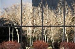 Aspen Tree Reflection Image stock
