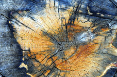 Aspen tree stump close up. Color wooden texture Royalty Free Stock Photo