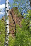 Aspen Tree in Telluride. An image of an Aspen with the Rocky Mountains in the background in Telluride, Colorado Stock Photo
