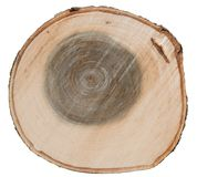 Aspen tree trunk cross cut wood texture Stock Photography
