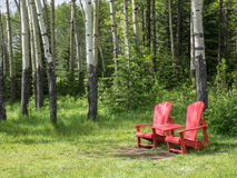 Aspen tree trunks in spring with red chairs Stock Photos