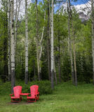 Aspen tree trunks in spring with red chairs Stock Photo