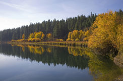 Aspen trees along a river in autumn Stock Photos