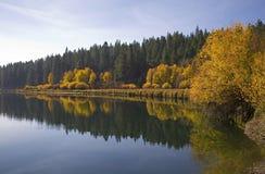 Aspen trees along a river in autumn Stock Photos