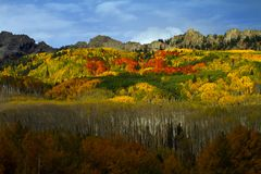 Aspen Trees of Color on Kebler Pass in Colorado. Aspen Trees of Color Red, Orange, Yellow on Kebler Pass in Colorado stock image