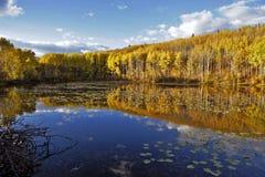 Aspen Trees in de Herfstkleuren Royalty-vrije Stock Afbeelding