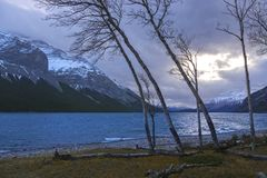 Stormy Autumn Day at Lake Minnewanka in Banff National Park. Aspen Trees and Dramatic Stormy Sky Landscape on Windy Autumn Day at Lake Minnewanka in Banff Stock Photos