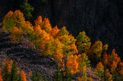 Aspen Trees Fall Colors Photographie stock