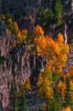 Aspen Trees Fall Colors Stock Photography