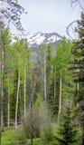 Aspen Trees Framing um pico de montanha nevado em Rocky Mountain National Park fotos de stock