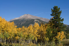 Aspen Trees in front of Mountain. Aspen trees turning to a bright yellow in front of Longs Peak, in Rocky Mountain National Park near Estes Park, Colorado Stock Photography