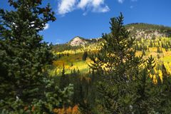 Aspen trees in the mountains of Colorado stock photo