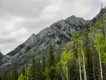 Aspen trees and mountains Royalty Free Stock Photography