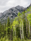 Aspen trees and mountains Stock Images