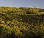Aspen Trees Surround Chair Mountain in de Herfst Royalty-vrije Stock Foto's
