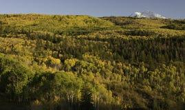 Aspen Trees Surround Chair Mountain in de Herfst Royalty-vrije Stock Afbeeldingen