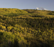 Aspen Trees Surround Chair Mountain no outono Fotos de Stock Royalty Free