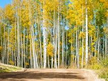 Aspen Trunks dans l'automne images libres de droits