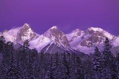 Aspen-Wald Lizenzfreies Stockfoto