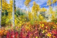 Aspen-Wald im New Mexiko Lizenzfreies Stockbild