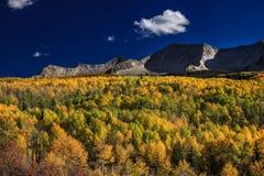 Aspen-Wald und -Bergblicke stockbilder