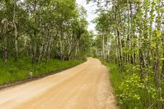Aspen Way Rocky Mountain National Park. A dirt road, with Aspen trees on either side, In Rocky Mountain National Park, Colorado stock photos