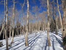 Aspen in Winter Royalty Free Stock Photos